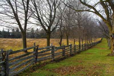 How Do I Handle My Neighbor's Encroaching Tree Branches? | Center