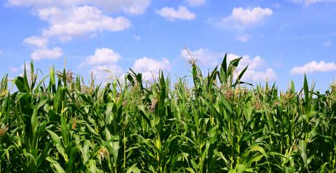 Iowa Court Gives Farmer Another Trial In Case Alleging Breach Of